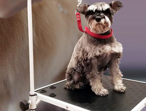 M 50 | Mesa regulable para peluquería canina o veterinaria